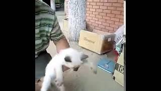 Хозяин котят в ужасе