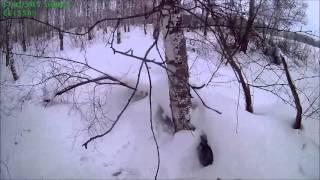 Охота на зайца беляка 2016 с русской гончей