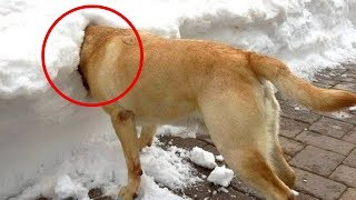 Animals & Snow!   Funny Animals in Snow   Funny Animal Snow Videos