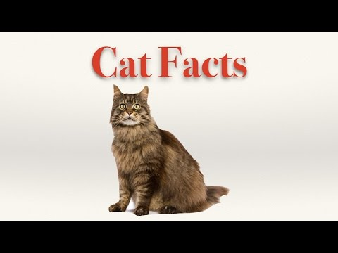 Cat Video Showing Interesting Cat Facts