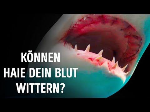 können-haie-blut-wirklich-auf-einen-kilometer-wittern?