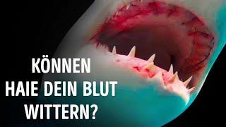 Können Haie Blut wirklich auf einen Kilometer wittern?