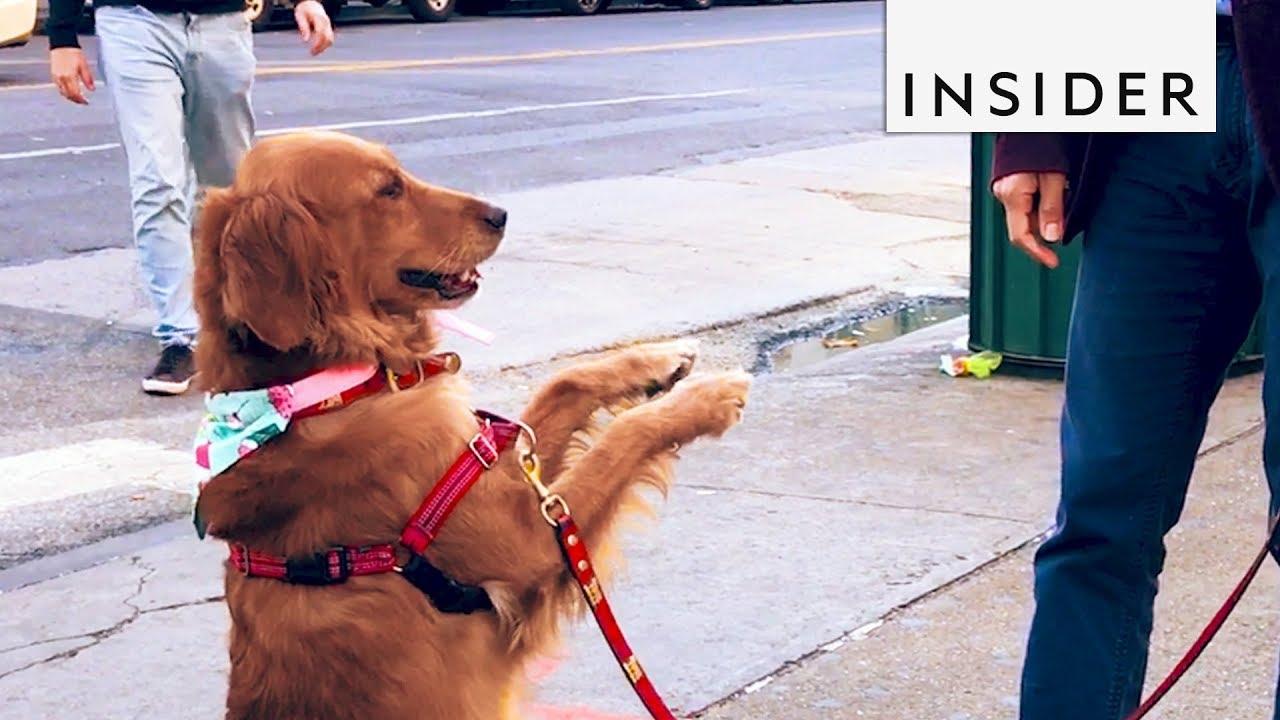Кученце што обожава да се гушка со луѓе