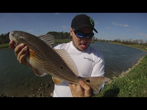 Catching a Redfish near Downtown Houston in Freshwater!