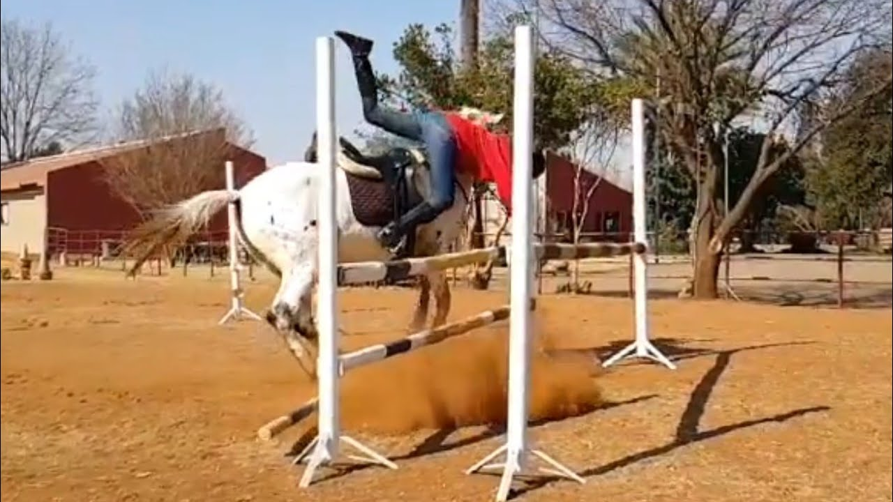 Horse Bloopers and Fails: get back up again