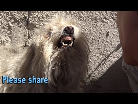 Rescued Dog Can't Help Believing It's True