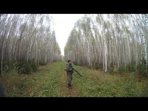Охота с Фаготом в Кировской области на зайца беляка сезон 2019-2020 года часть 2