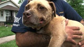 Rescued from Dogfighting, Meet Honey.mp3