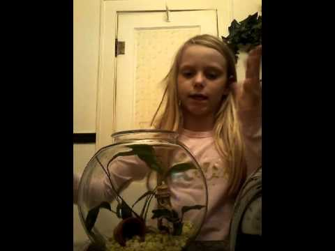 How to set up a betta fish bowl