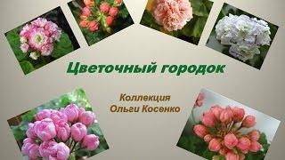 видео Герань тюльпановидная: фото, сорта, уход, размножение, где купить
