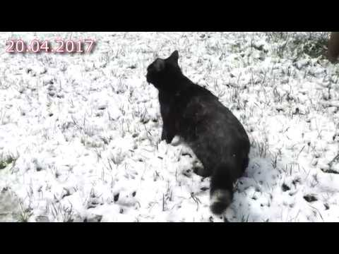 снег в апреле 2017
