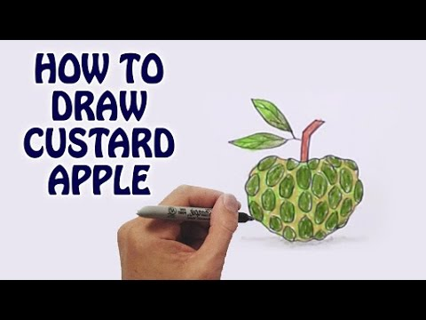 Learn How To Draw Custard Apple In Easy Steps