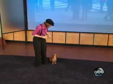Obedience Training For Dogs -  Dancing With  Dogs -- Freestyle