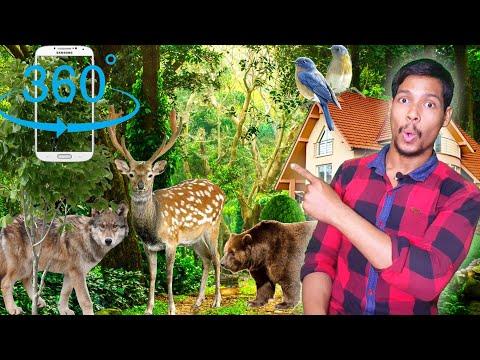 3D Forest Deer HD Live Animation Wallpaper App / Aaura Technical