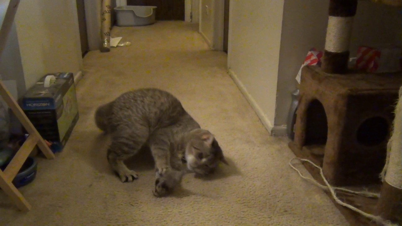 Cat Playing With Mouse Youtube