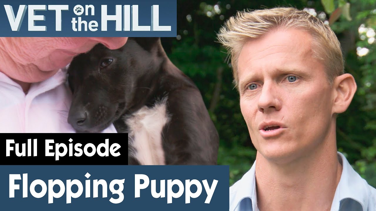 🐶 Border Collie Puppy Can't Support Its Head | FULL EPISODE | S02E12 | Vet On The Hill