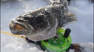 За самой страшной рыбой в Сибири. Рыбалка на паук.