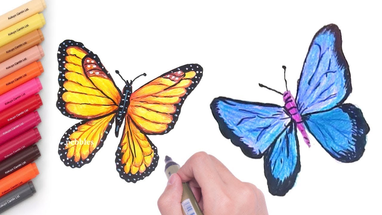 How to draw a realistic butterfly realistic butterfly drawing