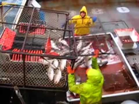 Cod Fishing in the Bering Sea