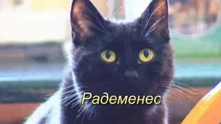 Радеменес. Котик - опекун больных животных в приюте города Быдгошч Rademenes