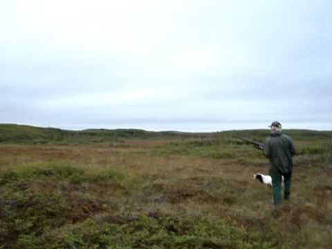 Ptarmigan Hunting In Newfoundland  ( Partridge Hunting )