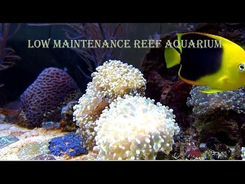 Low Cost Low Maintenance Reef Aquarium