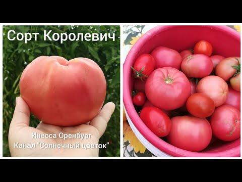 Хороший сорт томатов Королевич и Бравый генерал