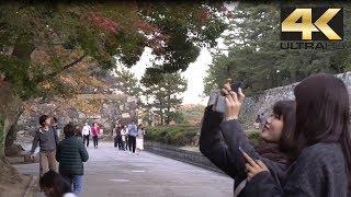 Rubah Warna Daun Musim Gugur - Autumn Colours Momiji in Nagoya Castle  紅葉 4K