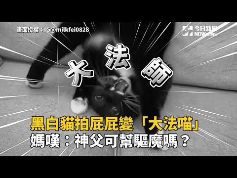 黑白貓拍屁屁變「大法喵」 媽嘆:神父可幫驅魔嗎?