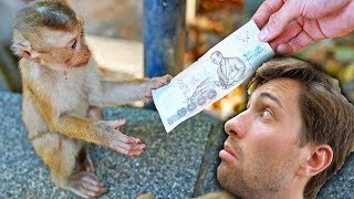 WILD MONKEY STOLE $1000 FROM US! (Thailand Vlog v3)