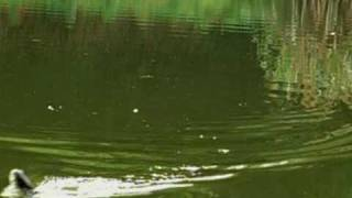 へら鮒釣り09-4-12C,浮子動作. thumbnail