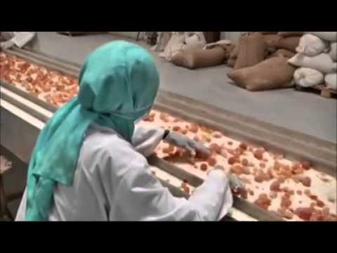 Khasiat Gum Arabic Al Manna