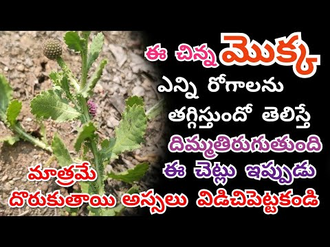 Beauty Tips For Girls  Men And Women  Telugu  Health  Tips  Bodatharam  Thinking About Facts