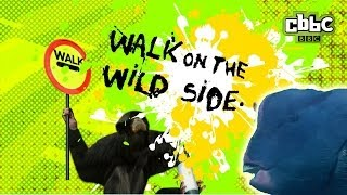 CBBC: Walk on The Wild Side - Posh Fish
