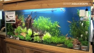 Aquascaping - Aquarium Ideas From Aquatics Live 2012, Part 5