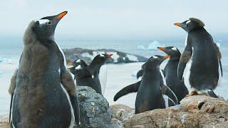 Antarctica: Official Trailer | BBC Earth