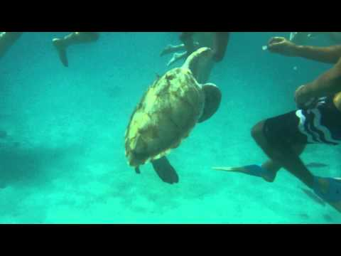 Snorkeling in Barbados, swimming with turtles and visiting a shipwreck