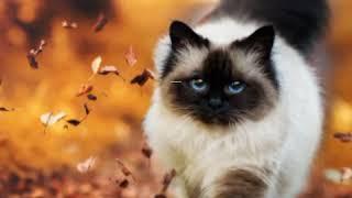 Какая порода кошек тебе подходит по гороскопу