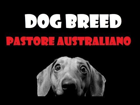DOG BREED - Pastore Australiano [ITA]