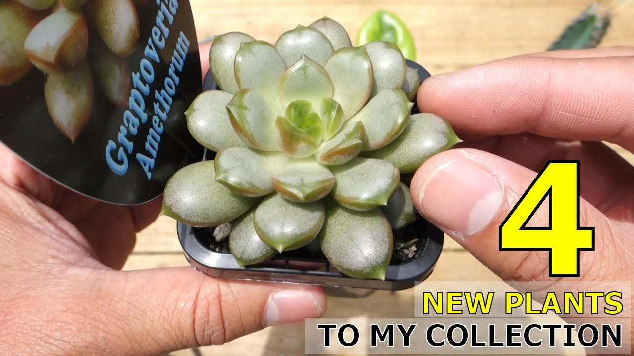 TẬP 49: 4 MORE PLANTS | CACTUS | INDOOR PLANTS | COLLECTION