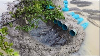 How To Show About Simple Fish Trap - Saving Fish in Hole!