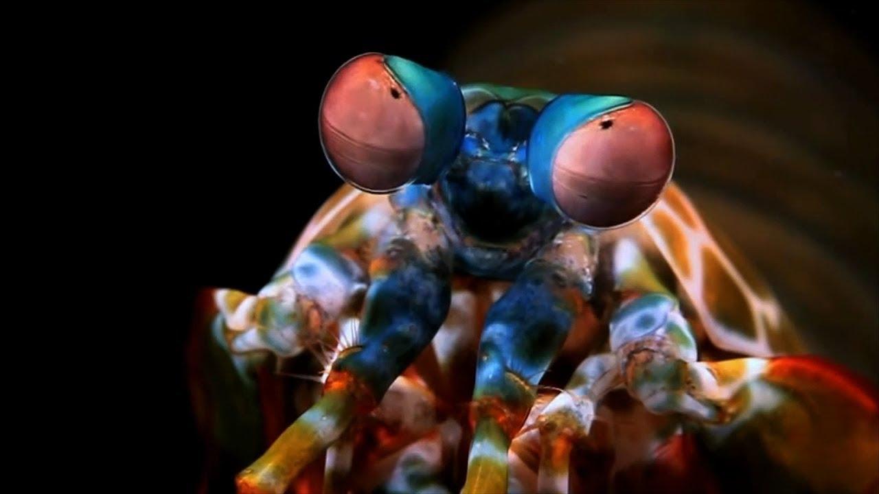 A screenshot from Mantis Shrimp Bioinspired Camera for Cancer Surgery