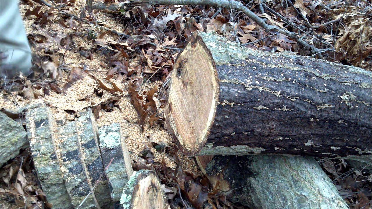 Poulan 3400 chain saw vs stihl 026