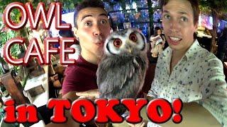 Owl Café!!!