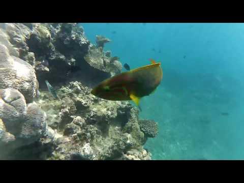 Free Diving at Hideaway Island, Mele - Vanuatu