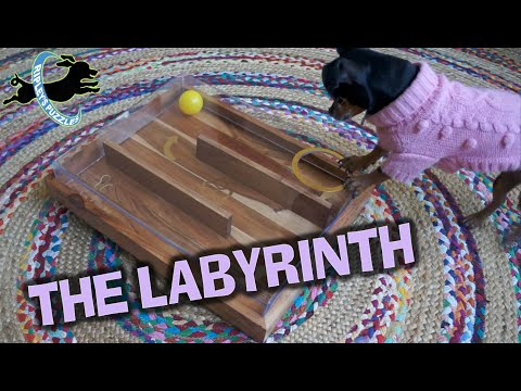 The Labyrinth Game - Ripley Plays With Her New Dog Puzzle