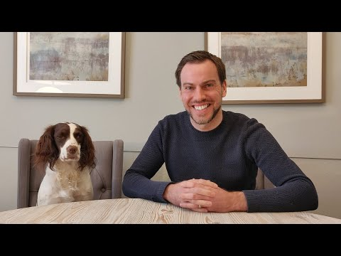SPRINGER SPANIEL TRAINING TIPS