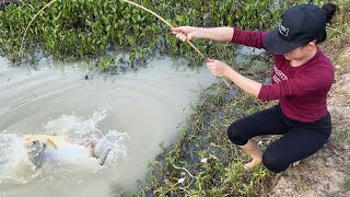MOST UNBELIEVABLE FISH TRAPPING SKILLS WITH MANTIS SHRIMP!