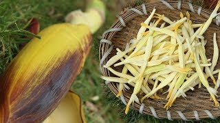 你肯定吃过芭蕉,但芭蕉花肯定没吃过,和韭菜一锅炖超级美味 【欢子TV】