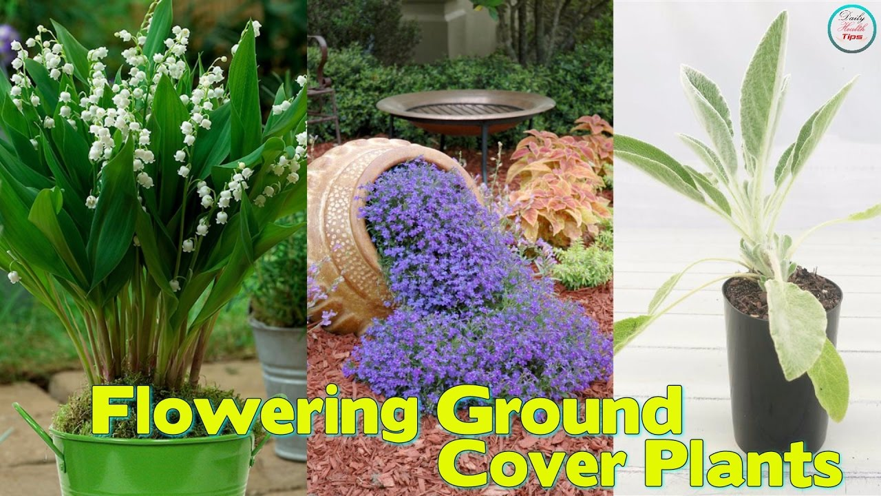 18 best flowering ground cover plants youtube 18 best flowering ground cover plants izmirmasajfo